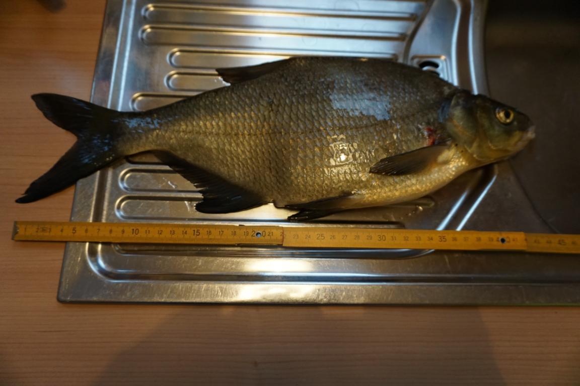 erster Fisch am Haken